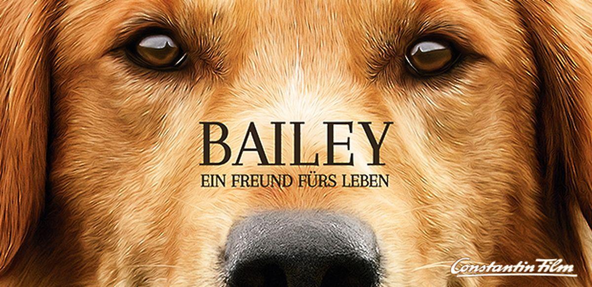 Bailey Ein Freund Fürs Leben Kkiste